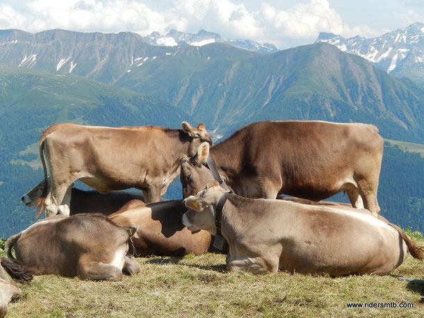 anche le mucche sembrano più belle.....
