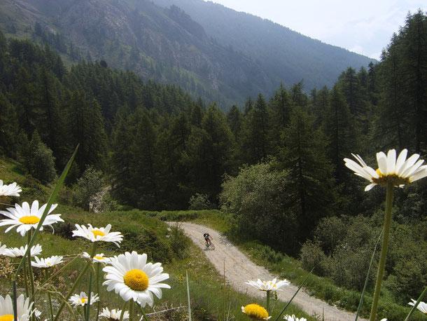 Scappiamo dal caldo torrido di Torino -35 gradi -per rifugiarci in Val D'Aosta con temperature decisamente più gradevoli!!
