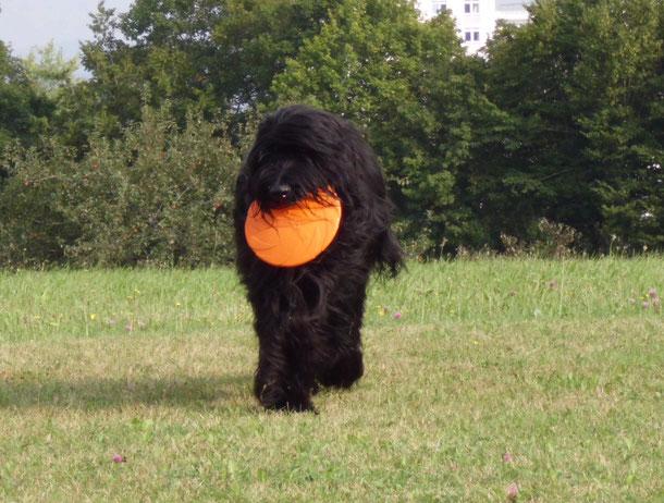 Gimli mit seinem Lieblingsspielzeug: Frisbee-Scheibe