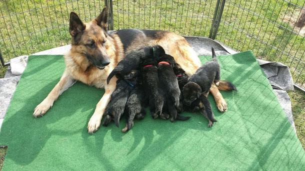 18.03.2015 Amely genießt die Sonne mit ihren Kleinen