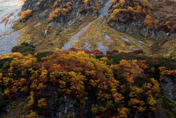 涸沢小屋上部の紅葉
