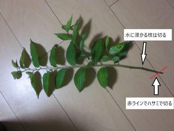 枝の切り方