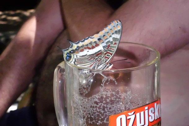 Der biertrinkende Schmetterling ff.