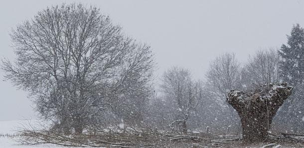 Was für ein Winterbild, wunderbar