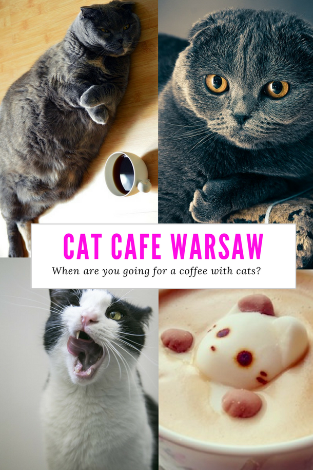 CAT CAFE WARSAW - MIAU CAFE WARSZAWA. IT'S TIME TO GO FOR A COFFEE WITH CATS