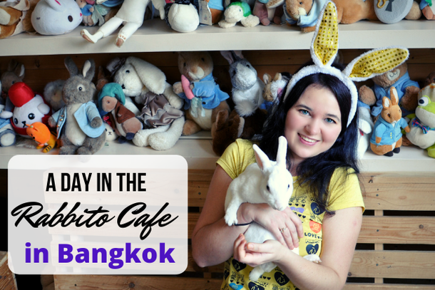 A day in the rabbit cafe in Bangkok, Thailand