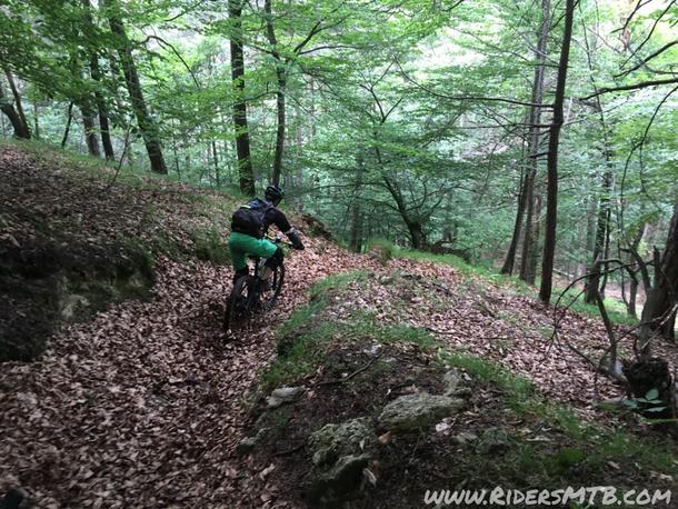 Gli ultimi metri in bosco