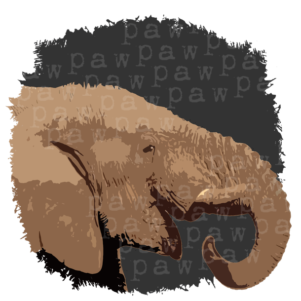 elefant,elefanten,afrika,safari,serengeti,steppe,huftier,bigfive,zoo,animal planet,wüste,animal,tier,wildtier,elfenbein,rüssel,dickhäuter,mammut,asien,südamerika,tierwelt,save the planet,naturschutz,tierschutz,naturecontest,shirt.tshirt,shirtdesign