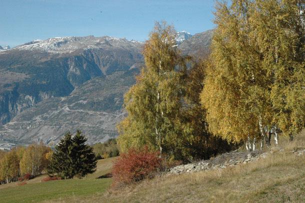 typisch herfstplaatje van Bürchen met geele berken