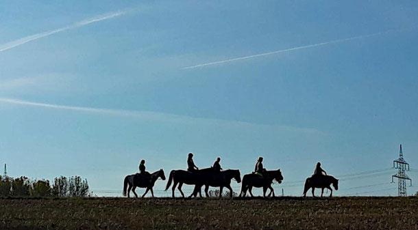 Sechs Pferde, sechs Reiter - und ein Fotograf aufm Radl