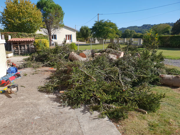 Demontage abattage elagueur elagage taille arbre saint-gaudens lannemezan