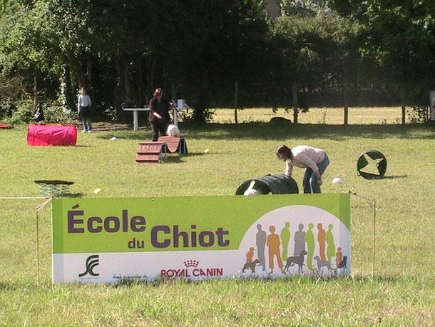 """""""Fil rouge"""" de la journée: l'Ecole du Chiot"""