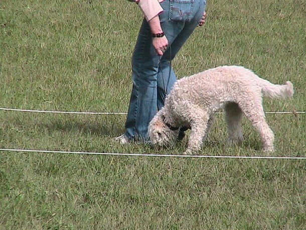 Initiation à la recherche de truffes