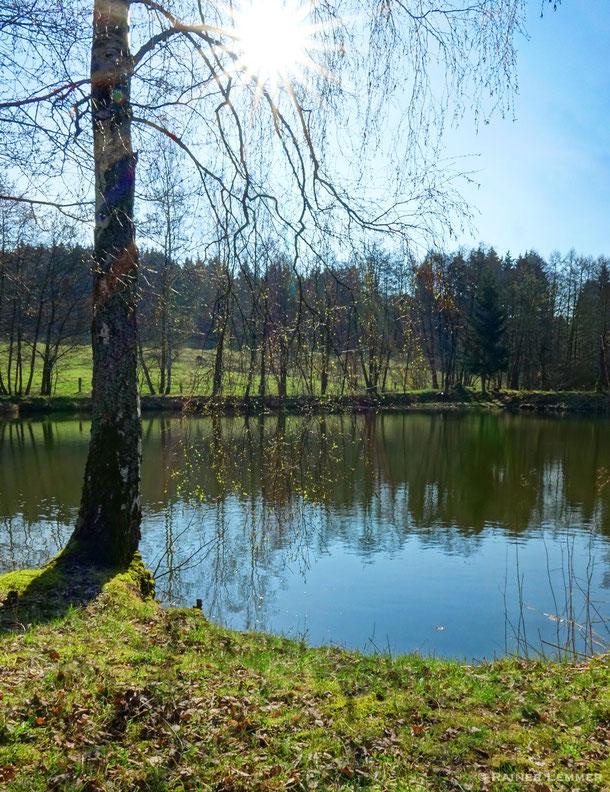 Weiher in der Nähe der Rotbachquelle
