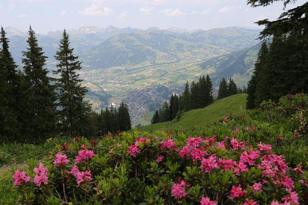Blick von der Wispile auf Gstaad