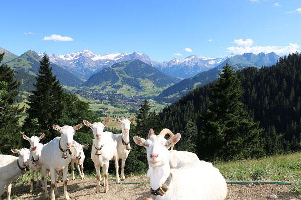 Saanengeissen im Hintergrund Gstaad und Wispile