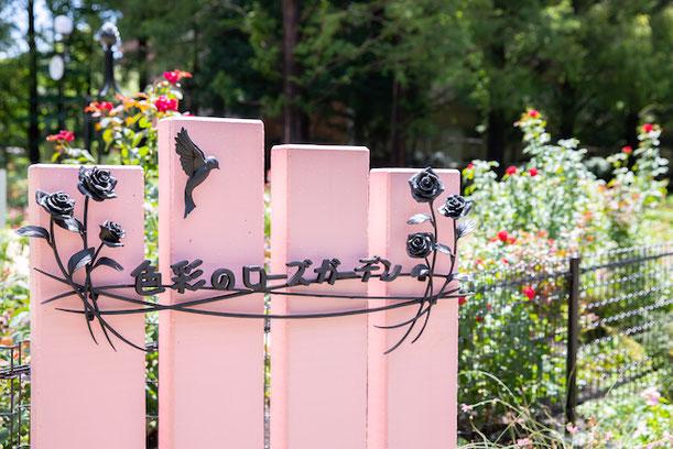 練馬区 光が丘 四季の香ローズガーデン 家族写真 子供写真 女性カメラマン 写真館