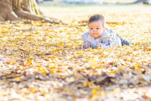 練馬区 光が丘公園 銀杏並木 出張撮影カメラマン こども 家族写真