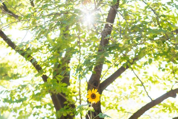 東京 練馬区 光が丘 出張撮影 出張カメラマン ロケーション撮影 秋の陽公園