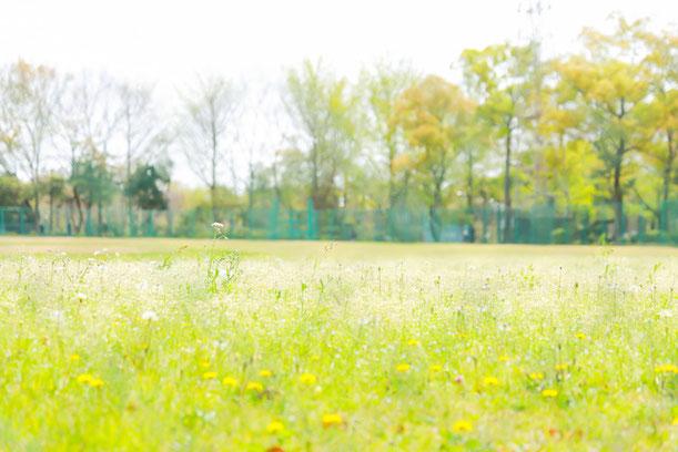 練馬区 城北中央公園 出張撮影 公園フォト 女性カメラマン 料金格安