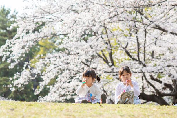 練馬区 光が丘公園 出張撮影 2ショット 桜撮影 女性カメラマン