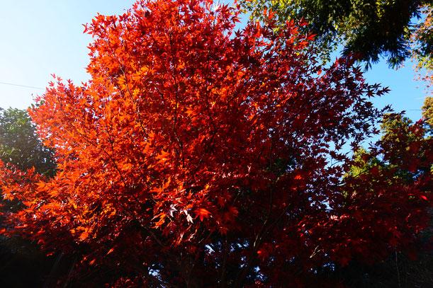 山頂の紅葉もすばらしかったです。