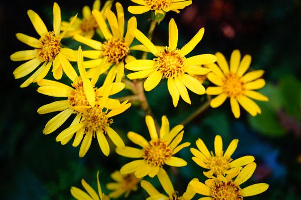 こちらのお花も満開で私をお出迎え。