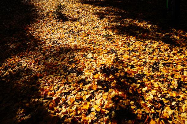 黄色いカーペットの上を歩いて遺跡の方へ移動・・・
