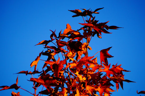 10月31日、夕日を撮影するために久々に下津井へ。