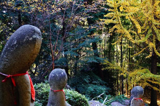 平日の午後はだれもいません。森の中の静寂、落ち着きます。