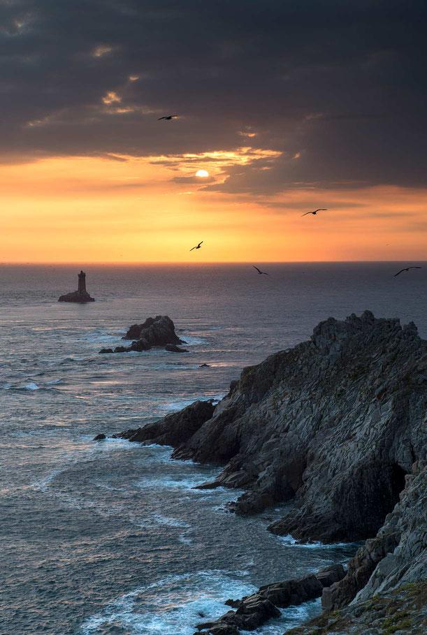 Birds and the setting sun in front of the Atlantic coast, Pointe du Raz, Bretagne, Brittany, France