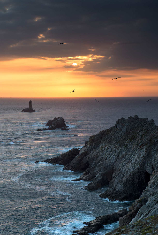 Birds and the setting sun in front of the Atlantic coast, Pointe du Raz, Bretagne, Brittany, France