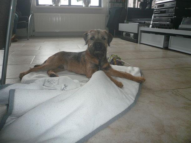 Attila (Rusty) mit 6 Monaten