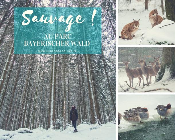 parc bayerischer wald animaux sauvages