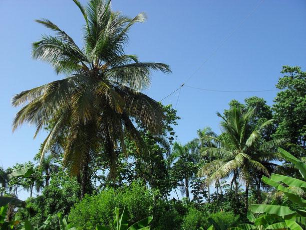 La windom antenna 6/80 metri