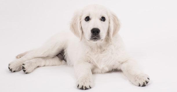 Vivre avec un chien épileptique
