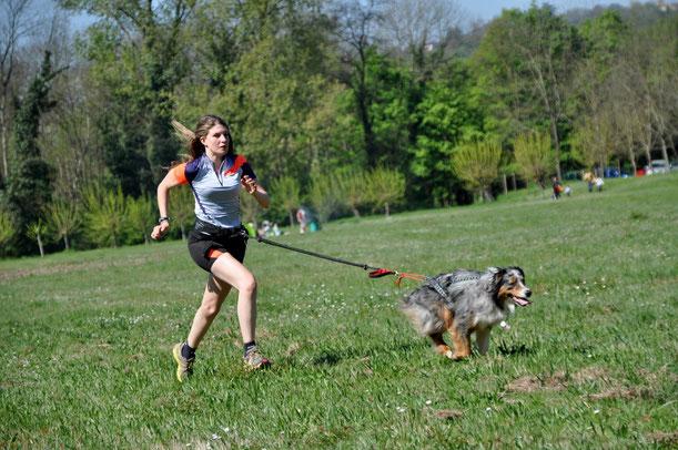 Canicross, chien, berger australien, running, course à pied