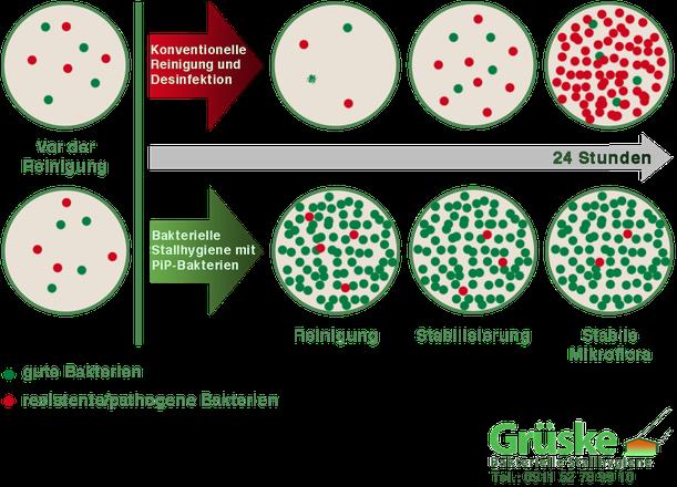Unterschied Desinfektion und Bakterien