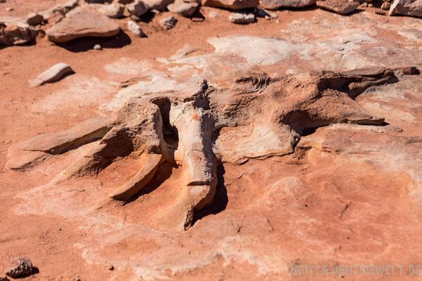 dinosaurier,navajos,sehenswürdigkeiten,tipps,herbst,oktober,usa,südwesten,rundreise,camper,jucy,campervan,arizona