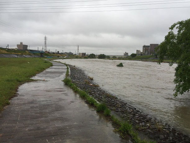 とんでもなく増水している矢田川。川岸を歩くのも危ない?