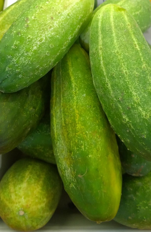 Gurken,Pepinos,Cucumbers,Gemüse,Legumes,Vegetables,Martins-Kulinarium,Carvoeiro,Algarve,Portugal