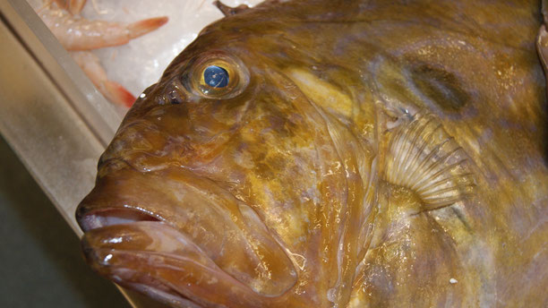 Petersfisch,Peixe-Galo,John-Dory,Fisch,Peixe,Fish,Martins-Kulinarium,Carvoeiro,Algarve,Portugal