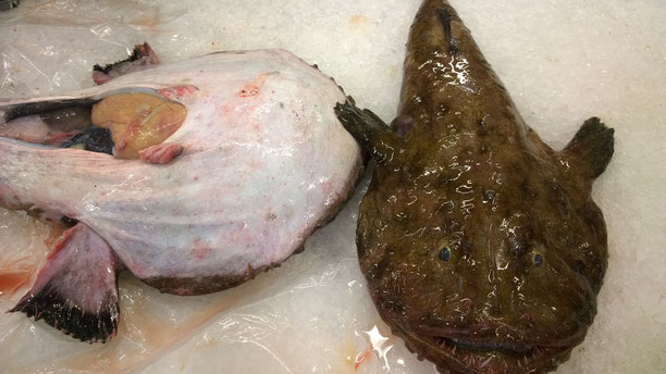 Seeteufel,Tamboril,Monkfish,Fisch,Peixe,Fish,Martins-Kulinarium,Carvoeiro,Algarve,Portugal