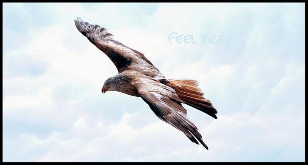 """""""Bild"""" Freiheit, Krafttier,  Adler, Klopfen, fliegen, Ängste, Trauma, Befreiung von Stress, Klopfakupressur"""