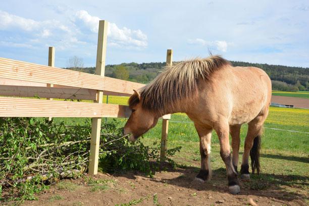 Naturgarten, Totholzhecke, naturnahe Pferdehaltung