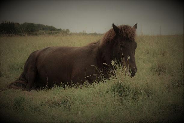 Mit Pferden einfach sein