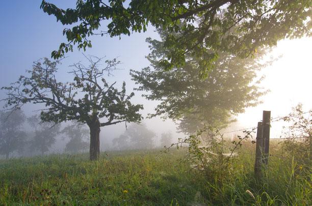 Obstwiese frühmorgens bei Witzenhausen