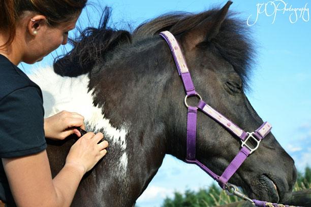 Faszien lösen beim Pferd