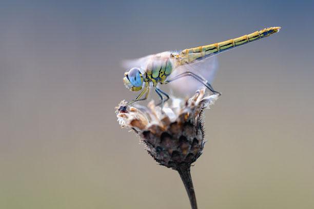 Bild von: https://insektensterben.ch/