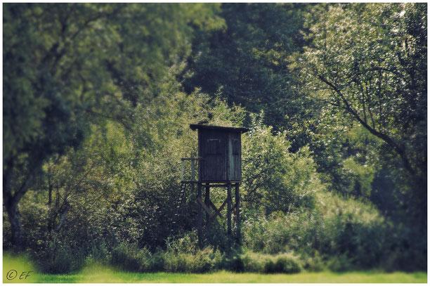 Mitten im Wald: Der Hochsitz